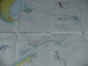 antarktis (2)