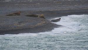West Coast Spitsbergen